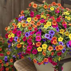 colorful flowers hanging baskets - Google Search
