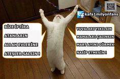 "Sosyal Medyadaki En Komik 29 ""Kedi Lobisi"" Capsi"