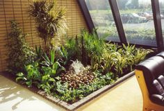 Real live indoor display, complete with water feature - for more information go to officelandscapes.co.uk Indoor Office Plants, Reception Ideas, Water Features, Display, Live, Water Sources, Billboard, Water Fountains, Backyard Ponds