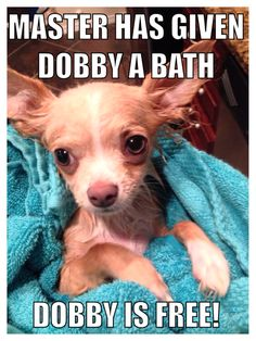Funny puppy meme. Love the Harry Potter reference