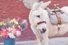 Camila, the donkey