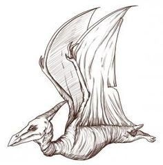 Realistic Dinosaurs - How to Draw a Pterodactyl