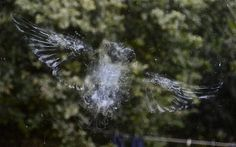Lisa Loader and Chris Denne were left amazed after this near-perfect imprint of an owl was left on their window.