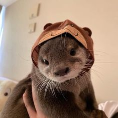 Niedliche tiere The cutest baby otter, # baby otter # the # sweetest A Guide on Switching Birth Cont Cute Little Animals, Cute Funny Animals, Cute Dogs, Cute Babies, Otters Funny, Funny Ferrets, Otters Cute, Baby Animals Pictures, Cute Animal Pictures