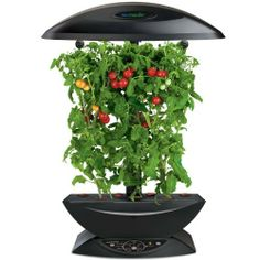 AeroGarden Extra by AeroGrow. $159.95. DESCRIPTION:The AeroGarden Extra is our most advanced, versatile and fully-featured garden. It delivers twice the amount of light and twice the arm height over our other AeroGarden models. The end result is larger yields and healthier, fuller plants. It includes a 24 extendable lamp arm, 24-hour light cycle.BENEFITS:In our tests we grew 300% more tomatoes, 40% more basil and 40% more flowers with the additional light and height of the AeroGa...