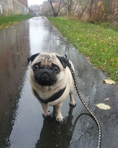 Walking after a rainy day