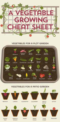 Vegetable Gardening Guide: what veggies to grow for plot vs. patio gardens