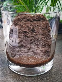 Coconut coir in terrarium Closed Terrarium Plants, Terrarium Jar, Garden Terrarium, Terrarium Ideas, Terrariums, Types Of Moss, Plants In Bottles, Organic Art, Moss Garden