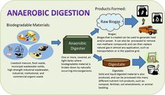 Anaerobic Digestion Process Anaerobic Digestion, Digestion Process, The Pipeline, Compost, Biodegradable Products, How To Remove, Composters