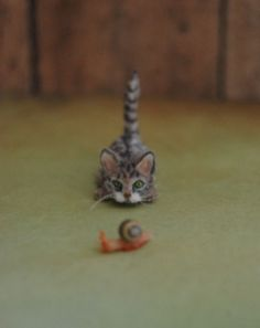 Cute realistic kitten and snail. By Reve.