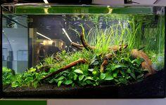 Beautiful Aquascapes Gallery | Tropical Fish and Aquascaping Resource – Aquaec