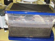 Vermicomposting – Worm Composting 101 – Home Composting