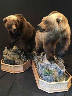 Bear Taxidermy By Brown Bear Taxidermy Studio - Pine Grove PA. 570-345-3030