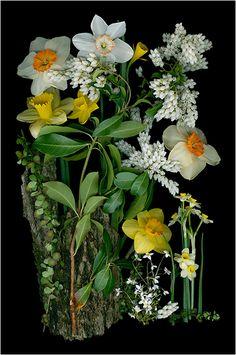 Pieris Group: Look at Ellen Hoverkamp's gorgeous scanner images for inspiration when planning your garden.