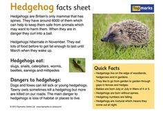 Free printable primary classroom display resources relating to the autumn season. Hedgehog Facts For Kids, Hedgehog Craft, Hedgehog Pet, Primary Classroom Displays, Classroom Themes, Eyfs Activities, Autumn Activities, Explanation Writing, Woodland Animals Theme