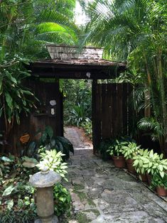 Shade is hard to come by in the tropics, but you're drawn to it when you find it. Great idea for an entry.