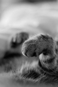 Sleeping paw-paws