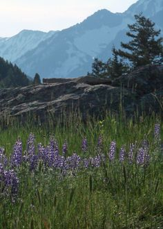 Springtime in montanna | Montana Ranch For Sale | Hall and Hall Blog