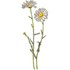 OX EYE DAISY - public domain clip art image ❤ liked on Polyvore featuring fillers, flowers, plants, decorations, backgrounds, doodles and scribble