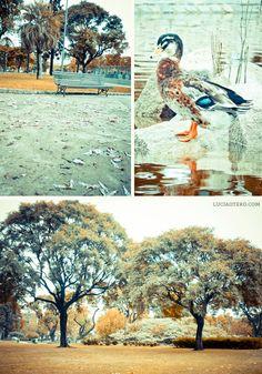 Otoño en Parque Centenario | ph: Lucía Otero #buenosaires #argentina #park #duck #Autumn #nature #trees #latinamerica