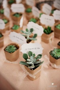 See more about succulent wedding, wedding favors and place cards.