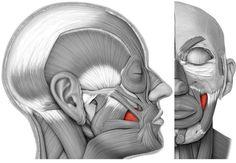Как правильно выполнять упражнения для щек чтобы сохранить молодость надолго