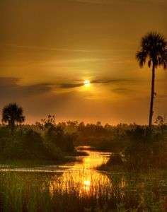 Take an airboat ride and explore the stunning nature that is the Florida Everglades. Old Florida, Florida Travel, Florida Usa, South Florida, Everglades National Park, Florida Everglades, Beautiful World, Beautiful Places, Us National Parks