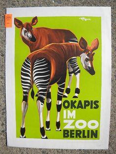 Superb Okapis p Berlin Zoo