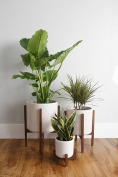 Mid Century Modern Planter, Plant Stand, Ceramic Plant Pot and Solid Wood Stand . - Mid Century Modern Planter, Plant Stand, Ceramic Plant Pot and Solid Wood Stand – 10 Indoor Plant - Indoor Plant Pots, Pots For Plants, Outdoor Potted Plants, Indoor House Plants, Plants In The House, Indoor Plant Stands, Tall Plants, Green Plants, Home Decor Ideas