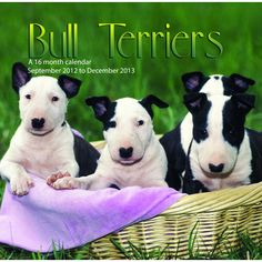 Bull Terriers Wall Calendar: This 2013 wall calendar features a dozen images of beautiful Bull Terriers. The perfect gift for anyone who loves these wonderful dogs!  http://www.calendars.com/Bull-Terriers/Bull-Terriers-2013-Wall-Calendar-/prod201300001896/?categoryId=cat10102=cat10102#