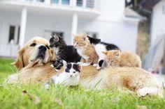 En #Huellas te damos todas las claves para que tu gatito sea un ejemplar de lo más sociable