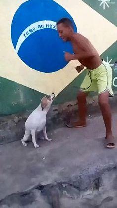 Dancing doggy at Brazilian Carnival
