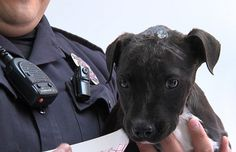Police officers rescued a bait dog puppy suffering multiple bite wounds to the head. After getting him medical attention, one of the officers adopted the dog.
