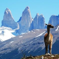 Guanaco in Torres del Paine Patagonia, Chile Oh The Places You'll Go, Places To Travel, Places To Visit, Wonderful Places, Beautiful Places, Trekking Holidays, In Patagonia, Countries Of The World, The Great Outdoors