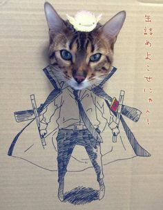 Fun Cardboard Cutouts Result in Comical Kitty Cosplay
