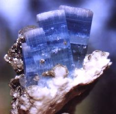 "They call it ""starburst""Aquamarine. The Aquamarine is a vibrant blue that appears in layers throughout the length of each crystal. The crystals cluster together with a stair-step pattern, completely flawless and terminated with a frosted top, w quartz, muscovite and albite. fr Gilgit , Pakistan TC33SAQU.jpg (29651 bytes)"