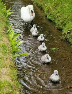 fat animals in a farm. a funny animation about a funny farm and its fat animals fette tiere auf dem bauernhof, eine sehr lustige animation very funny cartoon Cute Baby Animals, Farm Animals, Animals And Pets, Funny Animals, Wild Animals, Beautiful Birds, Animals Beautiful, Beautiful Swan, Beautiful Family