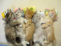 Google Image Result for http://pondstonecommunications.files.wordpress.com/2009/10/cute-kittens-nap-together.jpg%3Fw%3D450