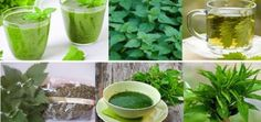 Nettle – You Will Be Surprised By The Benefits Of This Miraculous Herb!