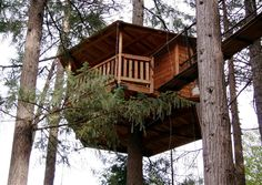 Oregon's Out'n'About Treesort offers the chance to sleep amid the branches in one of its 18 tree houses.