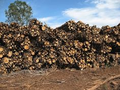 Stack of woody biomass bundled during a forest residues harvest operation in East Texas
