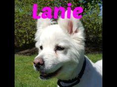Lanie