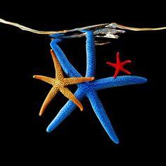 Starfish© Mark Laita