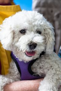 """11/25/16 - CALIFORNIA - """"JANIS"""" - READY FOR ADOPTION - SENIOR GIRL - NEEDS A LOVING HOME. AVAILABLE AT MUTTVILLE."""