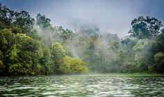 Foggy Forest Lake Situ Patengan #1