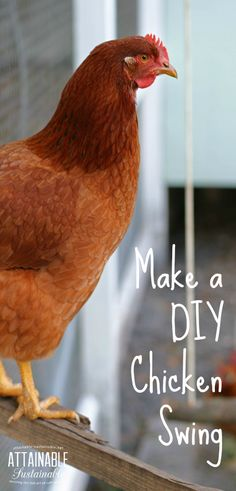 Make a DIY chicken swing from items you probably already have on hand. It's easy and a swing for chickens is instant entertainment for you AND your hens! Chicken Swing, Easy Chicken Coop, Chicken Coop Plans, Raising Backyard Chickens, Keeping Chickens, Pet Chickens, Urban Chickens, Backyard Poultry, Chicken Lady