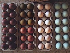 the chickens I want! From left to right these are: French Black Copper Marans, Olive Eggers and Cuckoo Marans, Cochin bantams, and Easter Eggers and Ameraucanas.