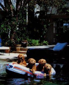Bruce Weber's dogs