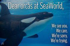 Boycott SeaWorld. Orca abuse. Animal rights. Blackfish.