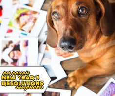 Enter (by 2/8/15) the Pet Parent New Year's Resolutions Sweepstakes for a chance to win more the $1,800 in pawesome prizes including a $500 Amazon Gift Card, BISSELL SpotBot® Pet Deep Cleaner, Tagg Pet Tracker & Activity Monitor GPS Plus, a free year of Petplan Pet Insurance, and JUST RIGHT by Purina personalized dog food. http://kristenlevine.com/petparentsweepstakes/